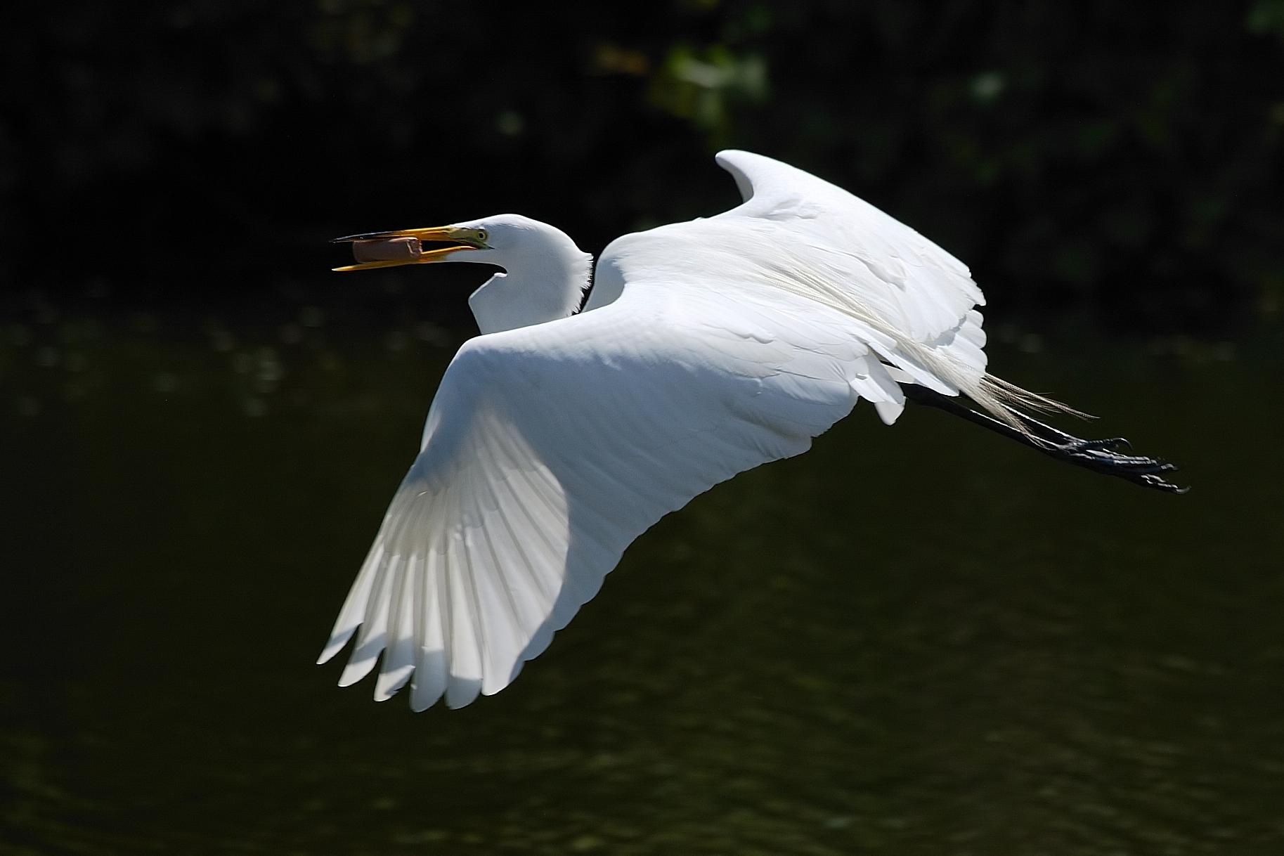 エバーグレーズ国立公園の画像 p1_29