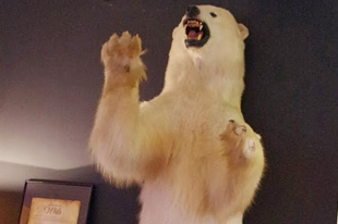 ホテルのロビーにいた白熊